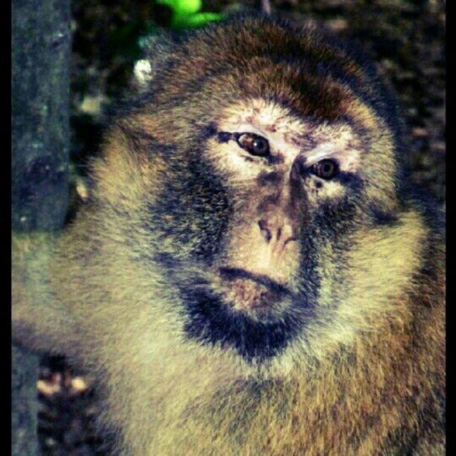 Affenpark Salem/Bodensee Bodensee Affen