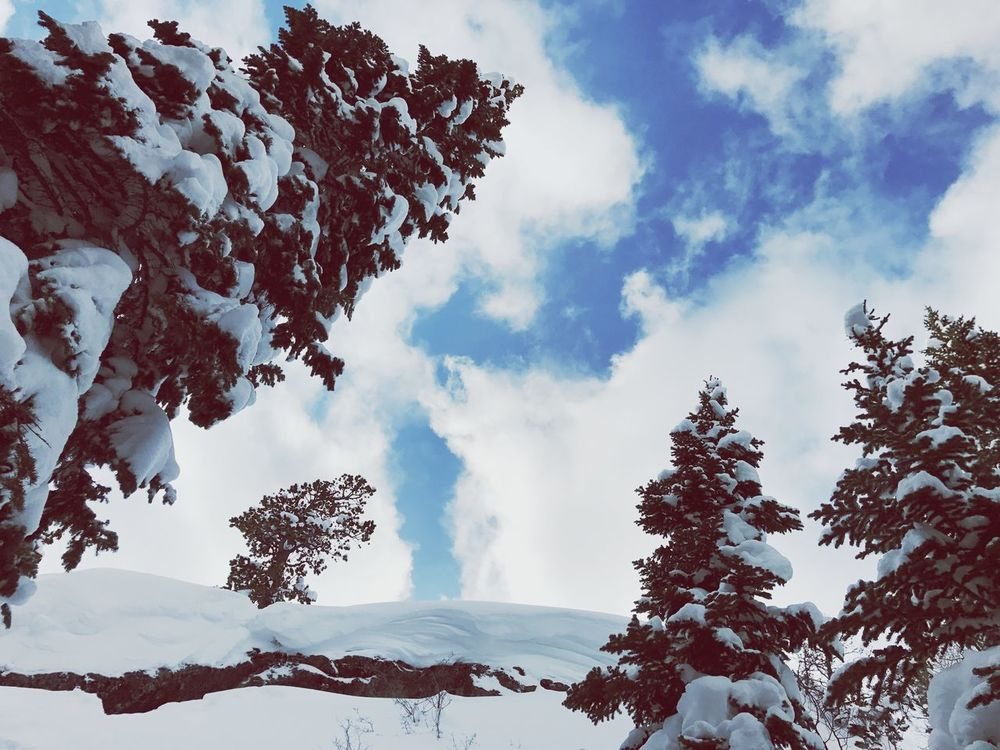 Look up! Sky Nature Beauty In Nature Tree Snow Covered Snowcoveredtrees Outdoors Scenics Winter Hike