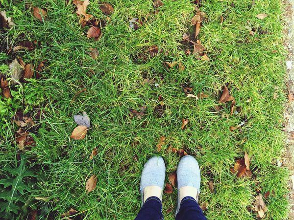 Green grass ?