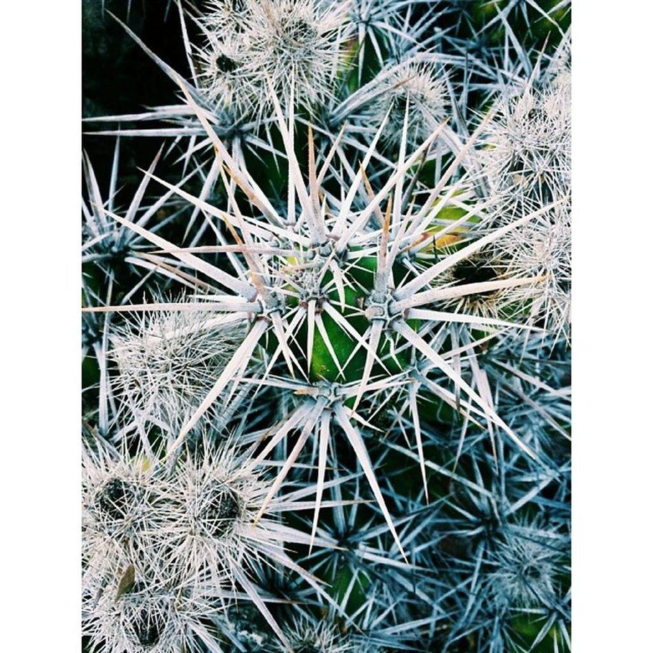It's a tiny city Pricks  Cactus Cacti Plants plantlife pattern nature naturelover