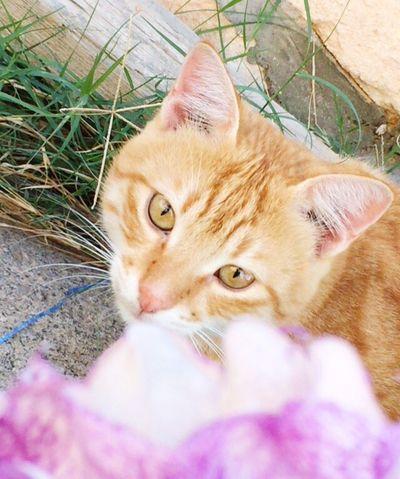 My cat 🐯 Cats 💙💛💜💚 Cat♡ Cats Cat Lovers Catlovers Cats 🐱 Cats Eyes Catslover Catselfie Cats Lovers