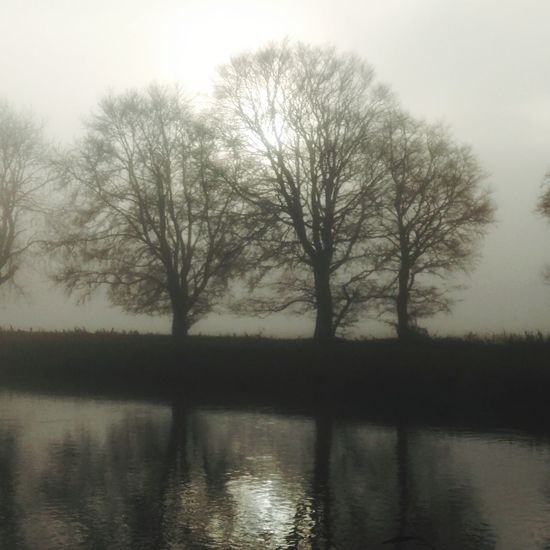 Reflection Tree Fog Bare Tree Beauty In Nature Nature Outdoors Scenics Tranquility Water Silhouette Winter Forest Ethereal Autumn Silence No People Day River River Tweed Misty Morning Mist Mix Yourself A Good Time