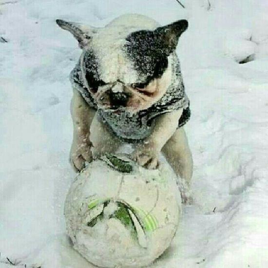 Yoda ??? Dogstagram My French Bulldog <3 French Bulldog Frenchie Cute♡ Dog Love Funny Pics Cute Pets Dog FUNNY ANIMALS