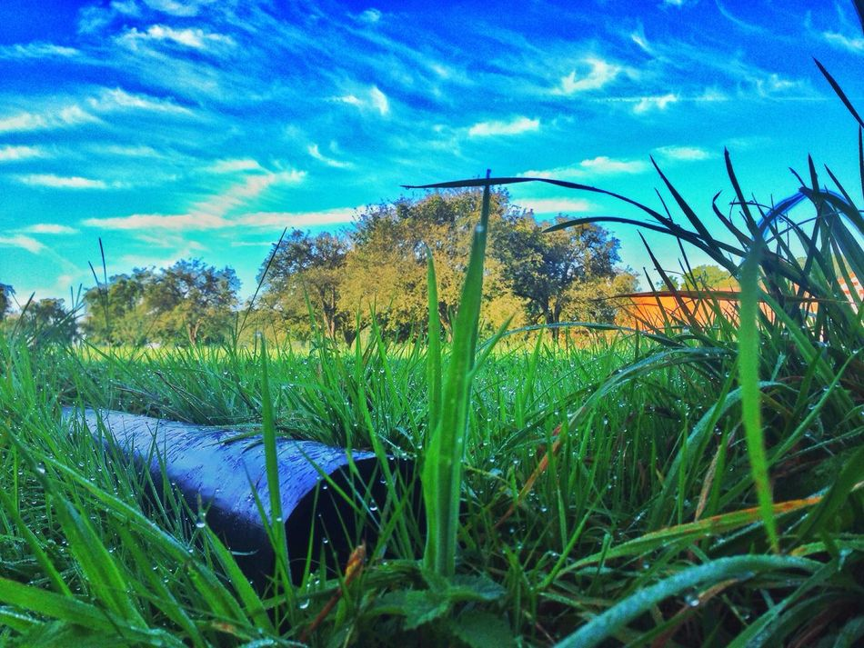 Growth Grass Field Sky Blue Plant Landscape Green Color Tranquility Rural Scene Crop  Beauty In Nature Nature Tranquil Scene Scenics Agriculture Cloud - Sky Blade Of Grass Farm Day IPhoneography Egnach Switzerland Swiss Rain