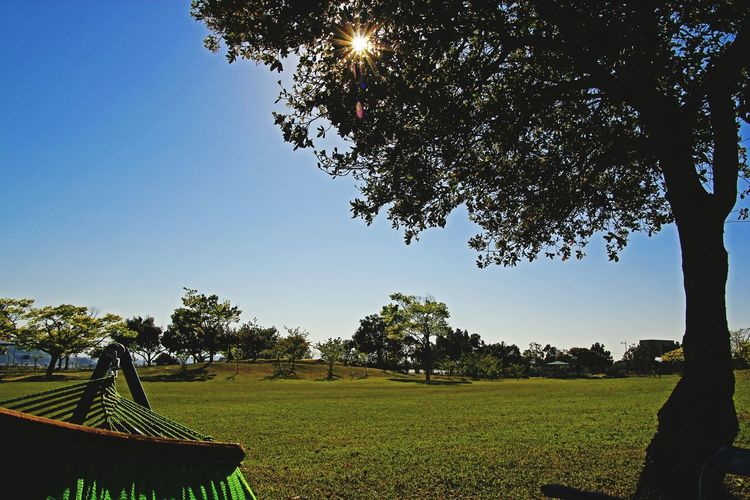 Tree Tranquility Grass Outdoors No People Nature Day Sky Beauty In Nature Low Angle View Clear Sky Sunlight Cityscape Hammockview Hammock  gentle Holiday