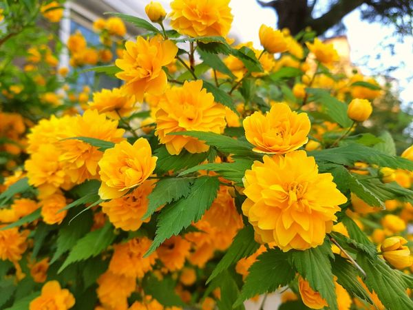 Flower Nature Plant Yellow Freshness Leaf Beauty In Nature Flower Head Sky No People Close-up Growth Outdoors Day Fragility Plant Part Blossom