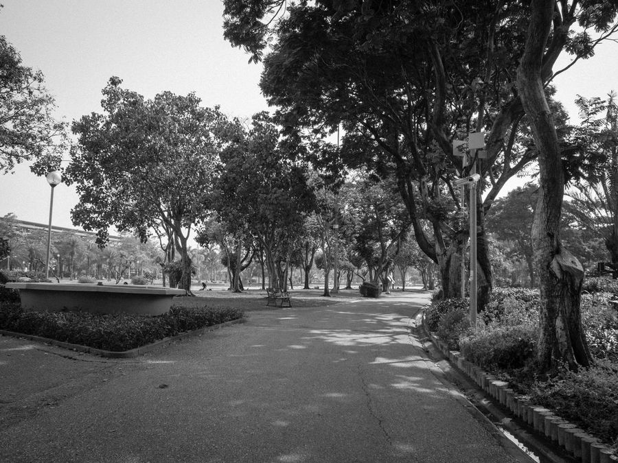 Beautiful Nature Beauty In Nature Blackandwhite Branch Clear Sky Diminishing Perspective Spotted In Thailand Jatujak Park First Eyeem Photo Footpath Nature Park Park - Man Made Space Road Road Street Sunlight The Way Forward Tranquil Scene Tranquility Transportation Tree Tree Trunk Treelined Vanishing Point