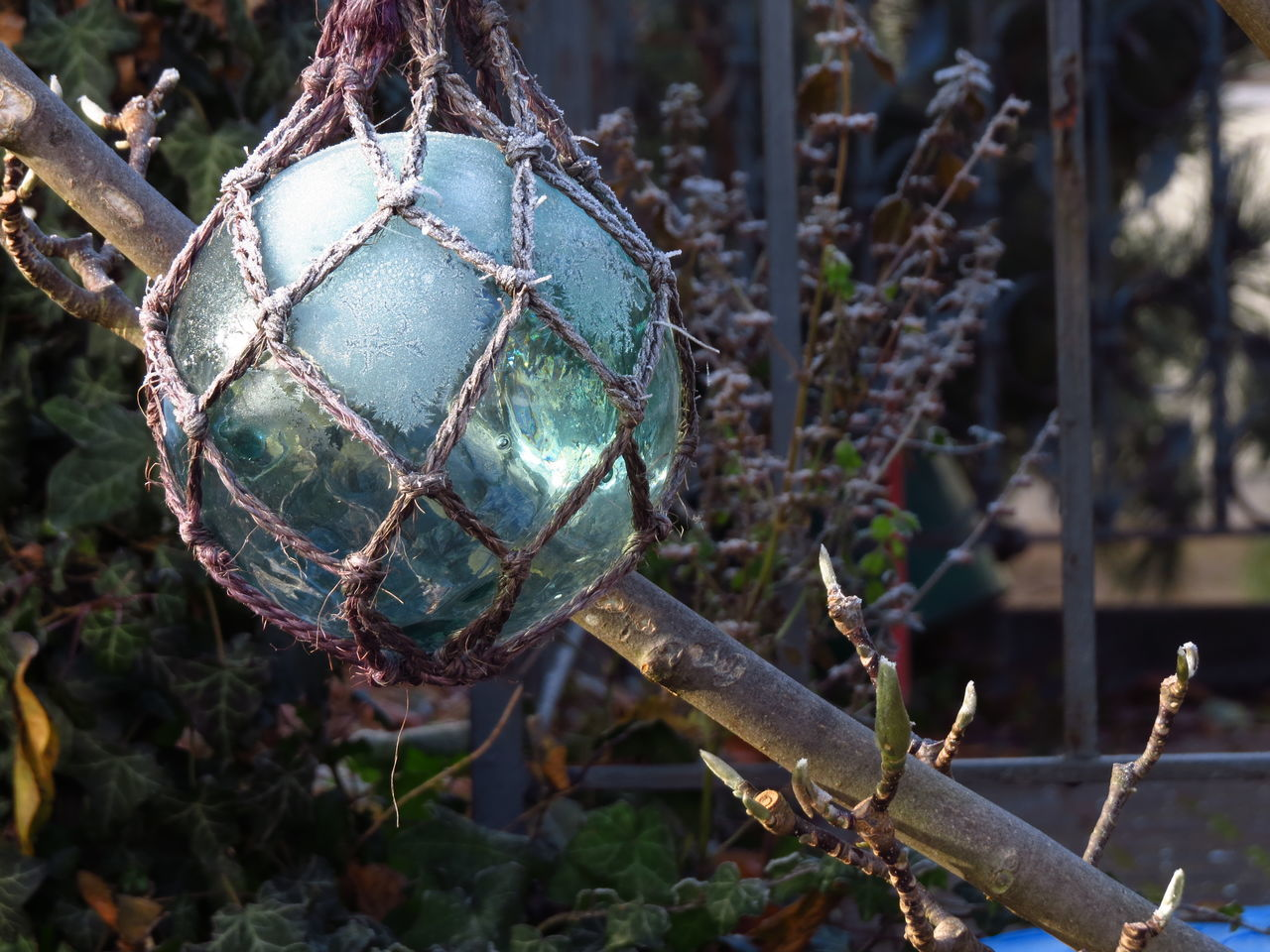 Cold Cold Days Cold Temperature Cold Weather Decor Decoration Frost Frosty Frosty Mornings Frozen Frozen Nature Glass Decorations Glassball Hoar Frost Hoarfrost Mirror Ball Rime White Frost Winter Winter Scene Winter Scenery Winter Season Winter Wonderland Winter_collection Wintertime