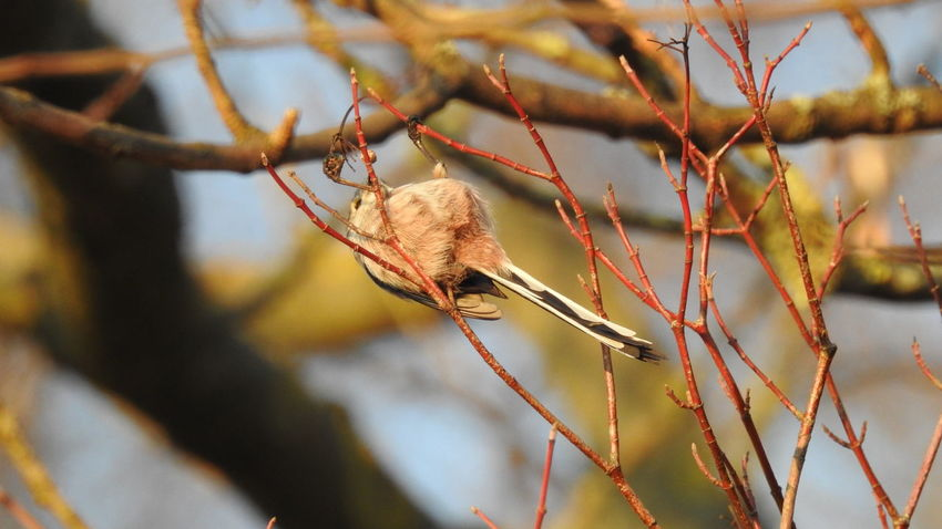 Animal Themes Animals In The Wild Autumn Beauty In Nature Branch Close-up Day Focus On Foreground Leaf Nature No People One Animal Outdoors Tomtit Tree