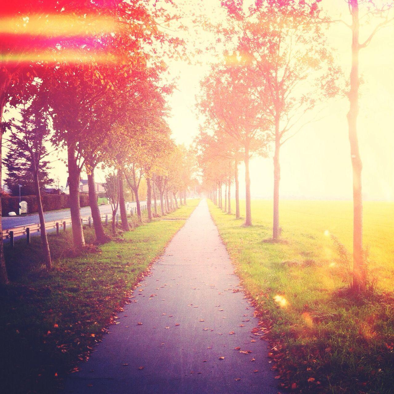 Narrow Pathway Along Trees On Landscape