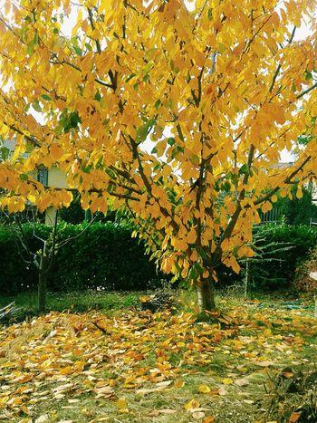 Autumn Colors Nature Vscocam EyeEm Nature Lover
