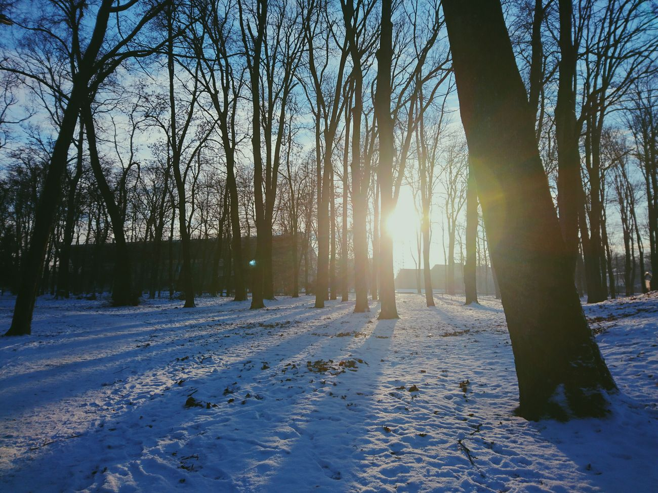 Tree Nature Sunlight Beauty In Nature Growth Outdoors No People Sky Day Great Day  Snow Good Day Hanging Out Winter Trees Wintertime Winter Beauty In Nature Winter_collection Cold Temperature Tree Nature Sun Great Day  White