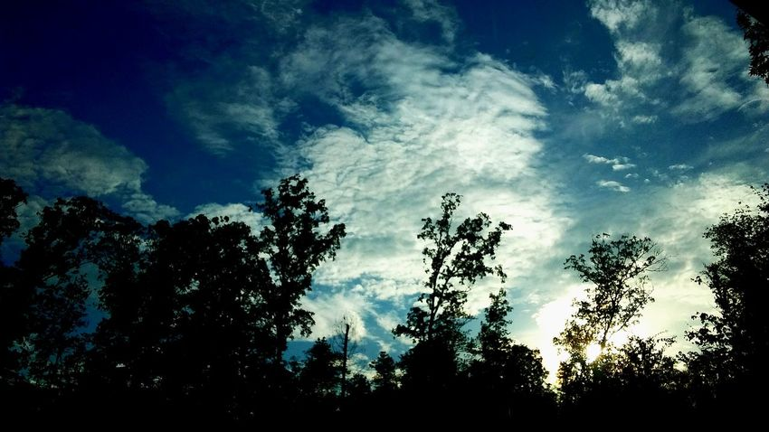 The Great Outdoors - 2017 EyeEm Awards No People Tree Nature Sky Cloud - Sky Outdoors Day Beauty In Nature Tranquility