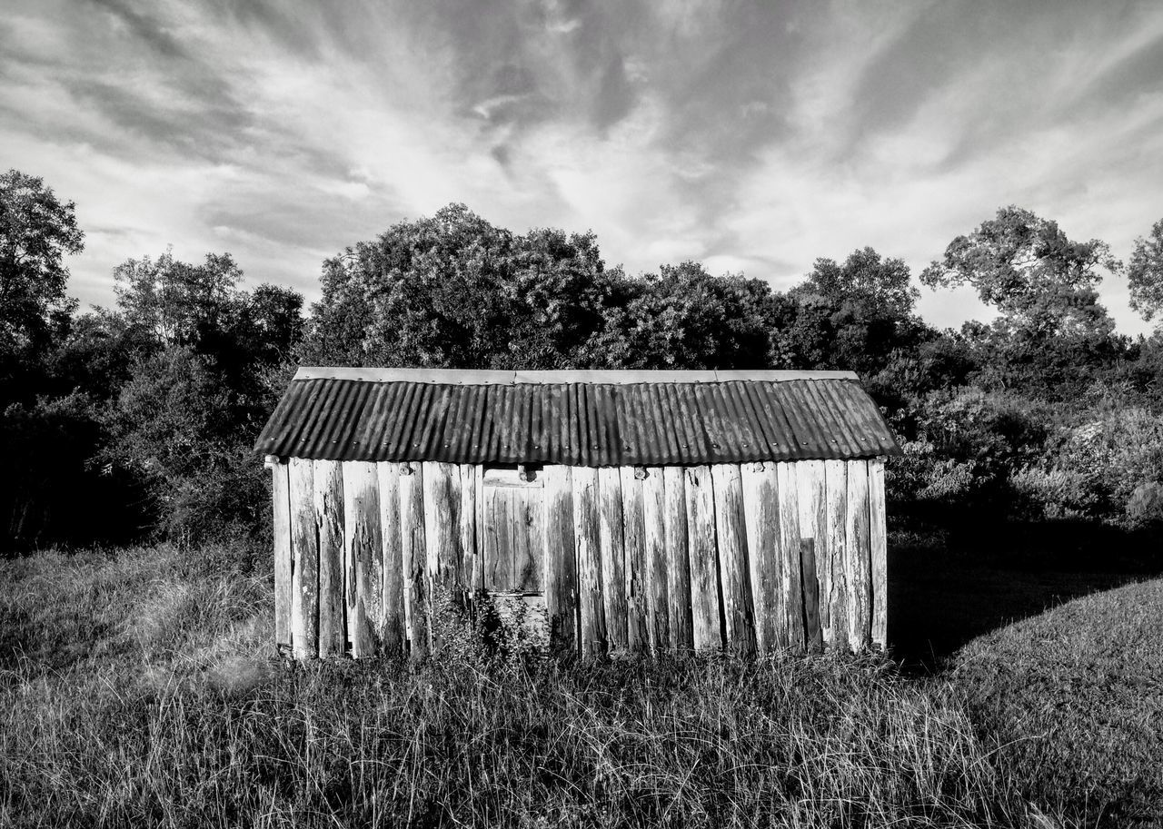 Growth Tree Nature Agriculture Farm Outdoors Field Sky Rural Scene Grass Plant Day Tranquility Barn Beauty In Nature Scenics Landscape Architecture Freshness Blackandwhite Blancoynegro Tacuarembo Uruguay No People