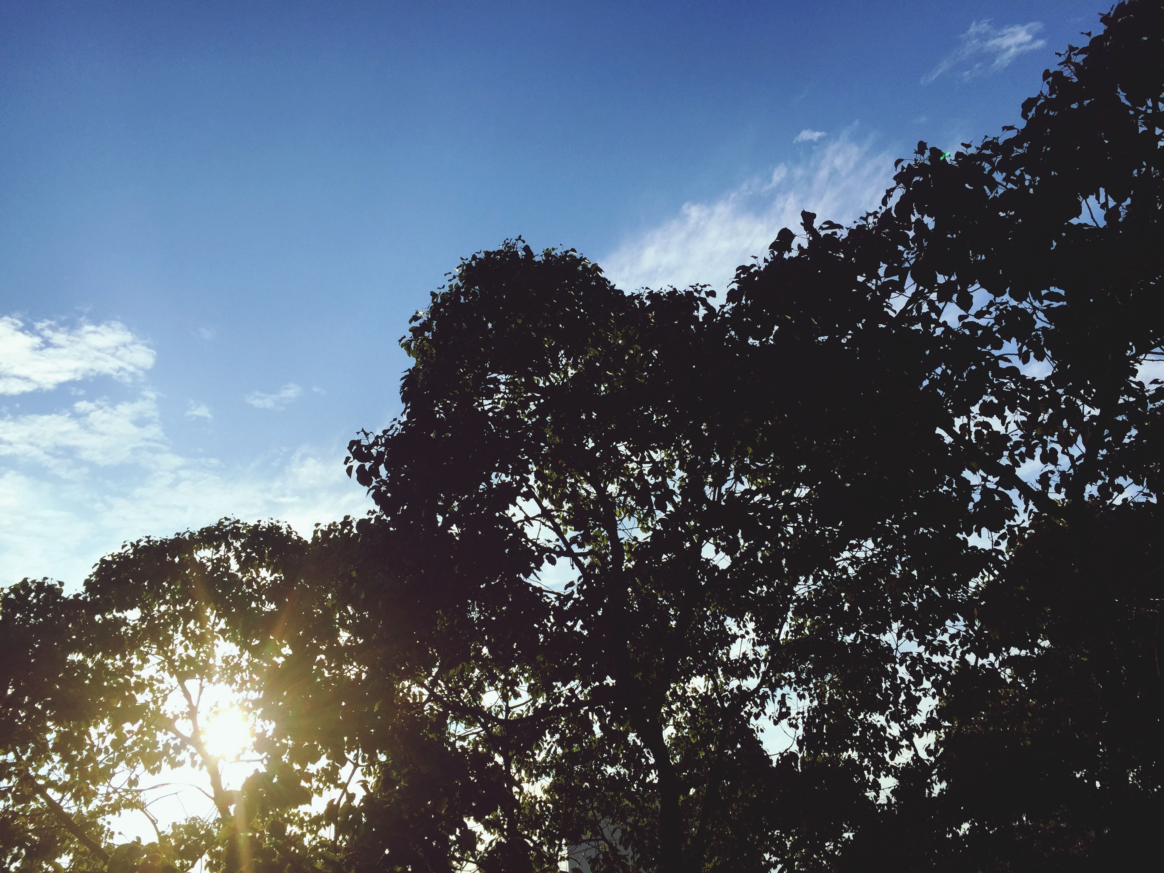 tree, low angle view, sky, silhouette, growth, tranquility, nature, beauty in nature, branch, sunlight, tranquil scene, cloud - sky, scenics, sun, blue, cloud, outdoors, no people, sunbeam, day