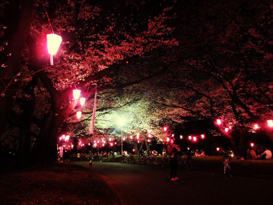 Sakura Hanging Out