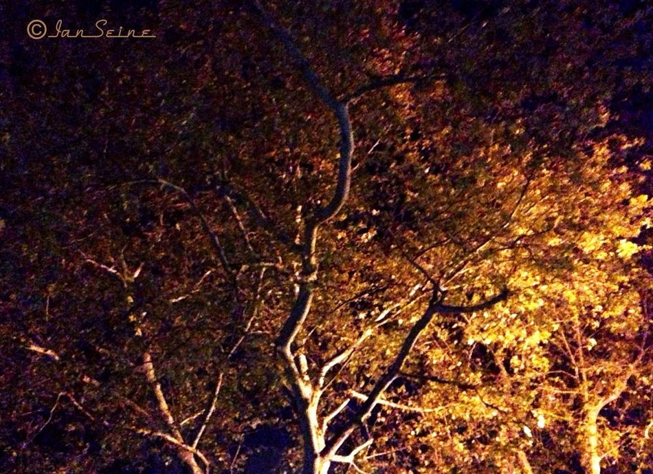 Nature Studying Trees Eye4photography