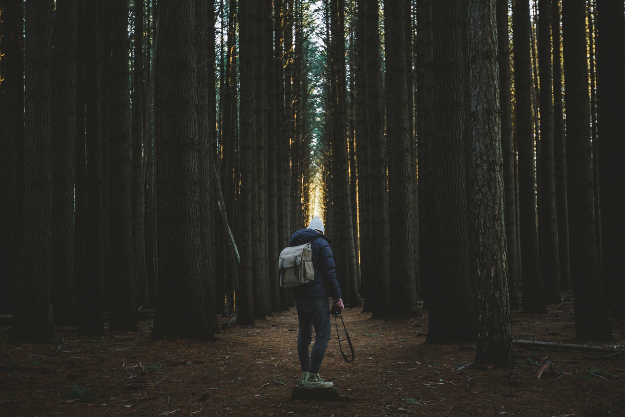 Adult Adults Only Adventure Bamboo Grove Beauty In Nature Casual Clothing Forest Full Length Leisure Activity Nature Night One Person One Woman Only Only Women Outdoors People Pine Woodland Real People Rear View Tree Trees Women WoodLand