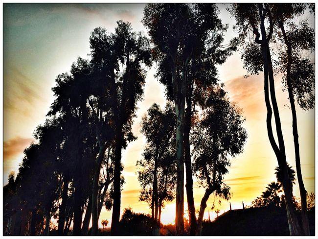 Gotta enjoy the little things Evening Sun The EyeEm Facebook Cover Challenge Sunset Silhouettes Sunset