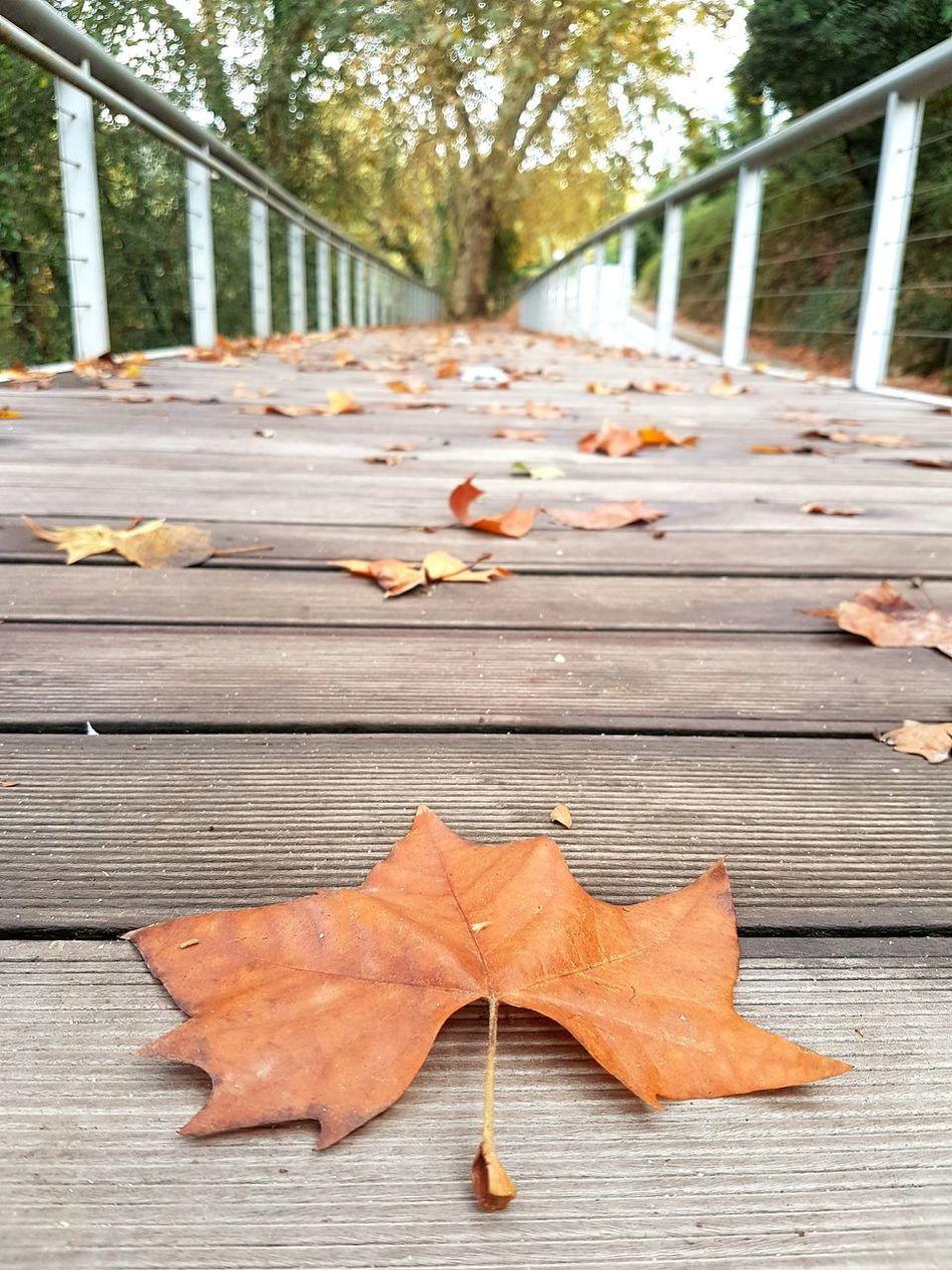 Autumn Nature Autumn Collection Tree Wood - Material EyeEm Nature Lover EyeEmBestPics Galaxys7 Leiria Portugal