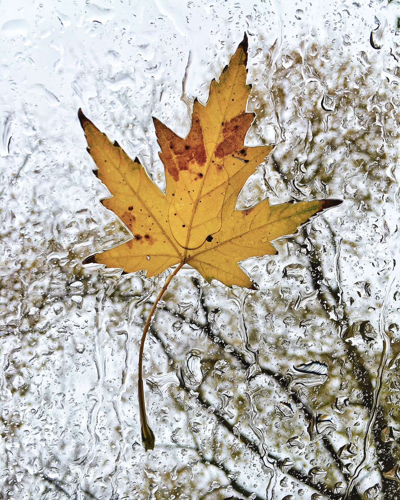 Wet Leaf Showcase: November Perspective Eye4photography  EyeEm Capture The Moment Open Edit