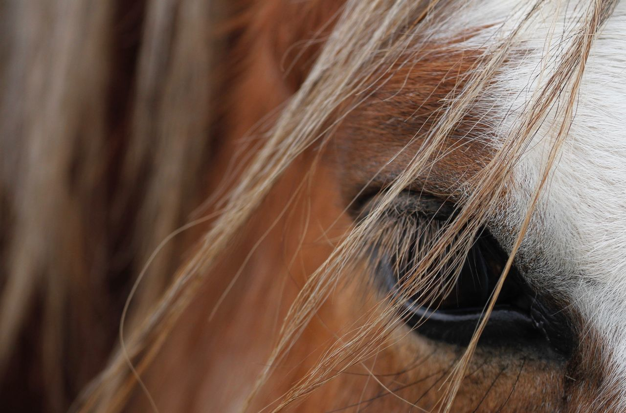 one animal, domestic animals, close-up, animal themes, full frame, mammal, no people, day, pets, outdoors