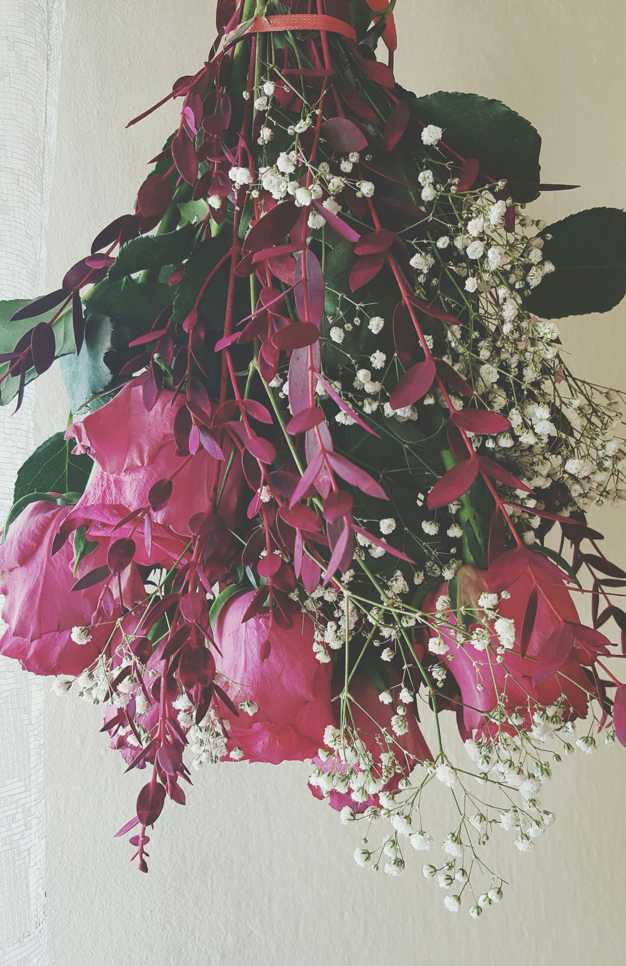 No People Pink Color Close-up Flower Freshness Indoors  Nature Fragility Flower Head Day Roses Roses Flowers  Rose Collection Birthday Blossom Freshness