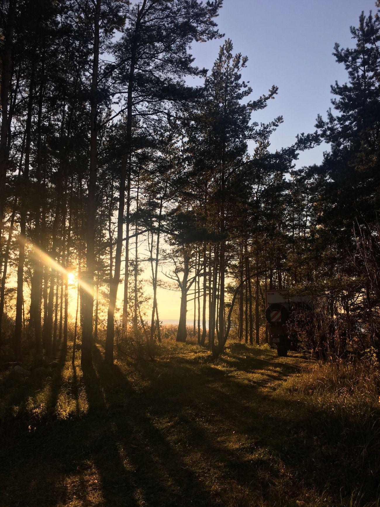 Sunset Coastline Baltic Sea Pinetrees Baltics2k16