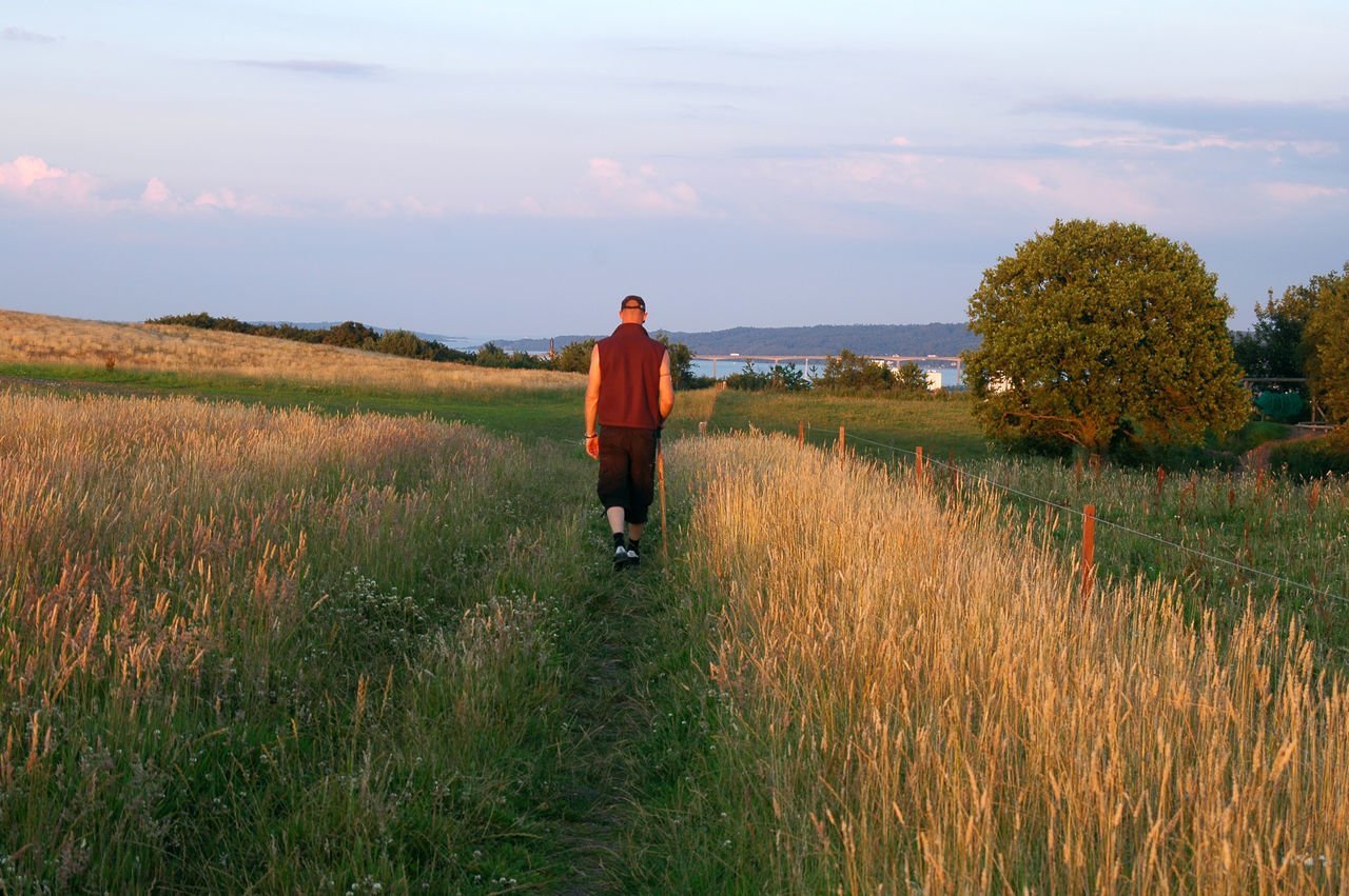 Man walking in evening sun Denmark Evening Sun Evening Walk Exercise Field Full Frame Grass Landscape Leisure Activity Lifestyles Man Walking Men Mindful Walking Mindfulness Nature One Man Only One Person Outdoors Path Rear View Scenics Tranquil Scene Vejle Walking Alone... Walking Stick