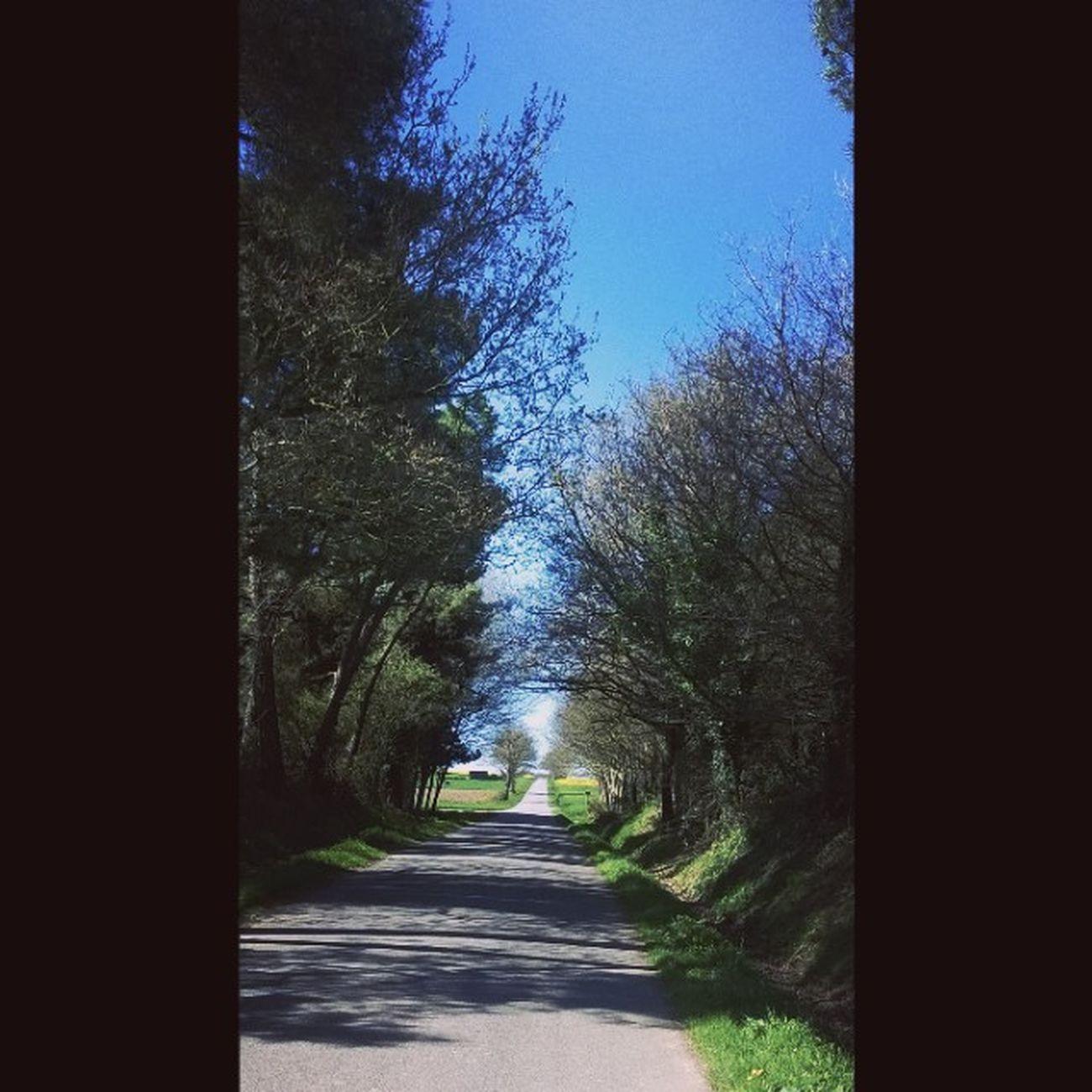 The Road between Loyat and Taupont - Ideal for a Beginner Biker as I am. La Route entre Loyat et Taupont, sans trafic: l'idéal pour le Cycliste débutant que je suis. Bretagneavelo Bretagne Bretagnetourisme Breizh Morbihan Miamorbihan Jaimelabretagne Arbres Trees Alberi Nature Natura Bluesky CielBleu Sky Ciel Cielo