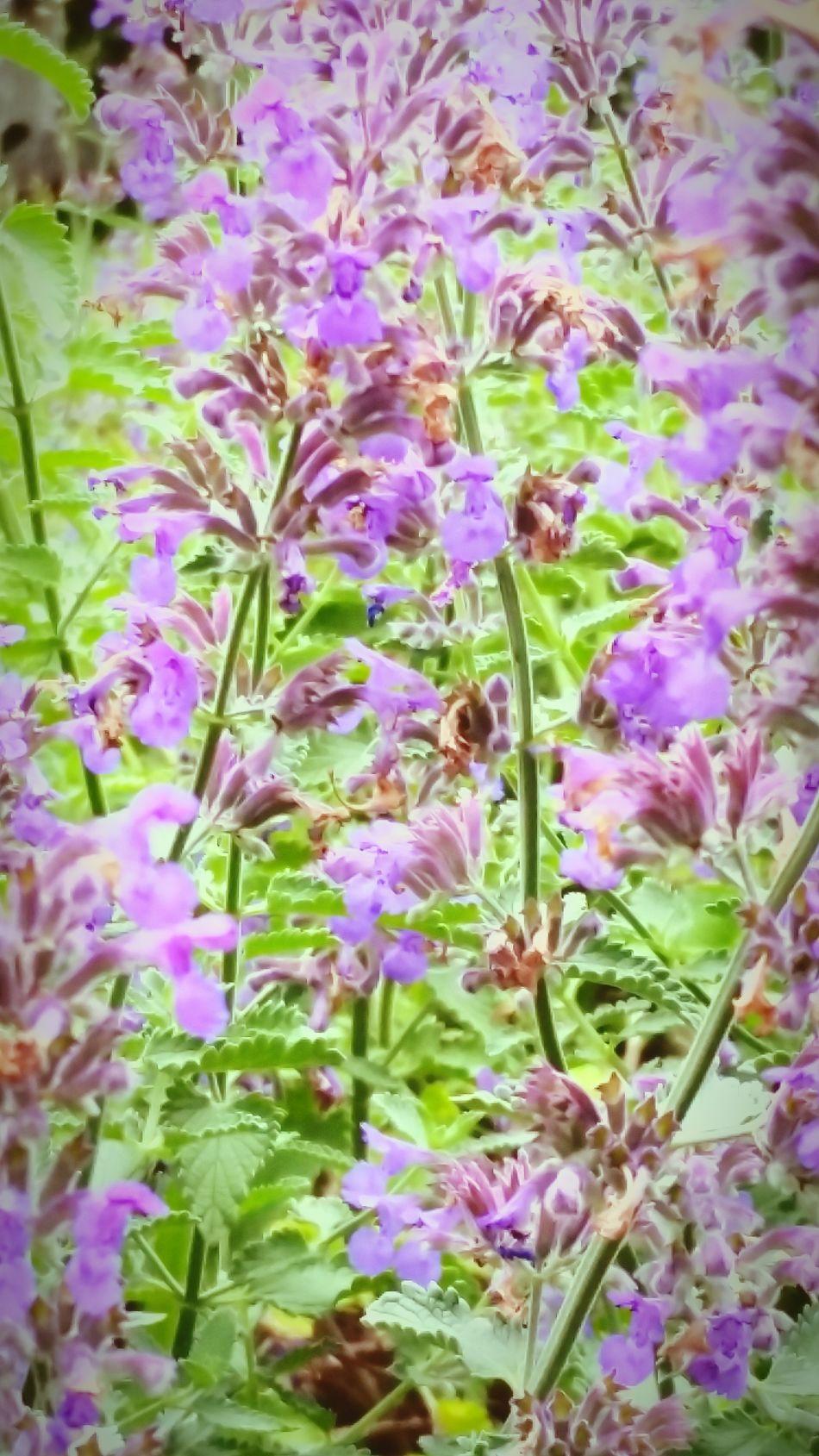 Flowers Taking Photos Walking Around