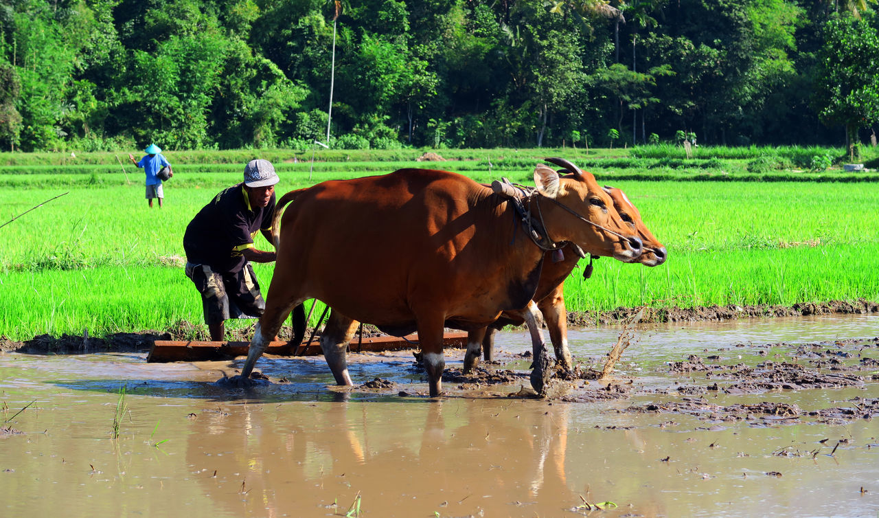 farmers activity Indonesia Culture Lombok Photo Works Culture Of Indonesia Rumahalir Lombok Island Lombok-Indonesia Indonesian Photographers Collection The Great Outdoors With Adobe Lombok Photographers Indonesia_allshots Indonesia_photography My Favorite Photo