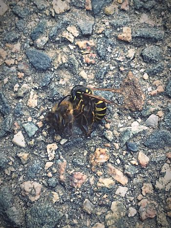 Wildlife Insect Outdoors Eat or be Eaten