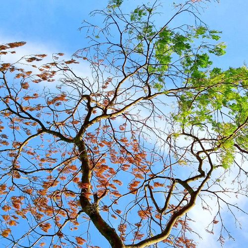 Beauty In Nature Tree Branch Sky No People Tranquility Nature