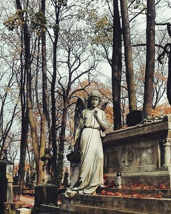 Statue Sculpture Tree Bare Tree Outdoors No People Scenics Travel Colors Nature Architecture Cmentarz Cemetery Weeping Angel Autumn