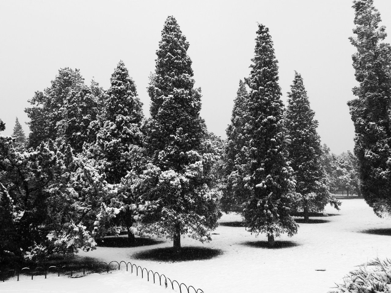 Beauty In Nature Beijing Beijing China Beijing Scenes BEIJING 北京 Beijing, China BEIJING北京CHINA中国BEAUTY China China Photos Cold Temperature Day Growth Landscape Nature No People Outdoors Scenics Sky Snow Tranquil Scene Tranquility Tree Winter