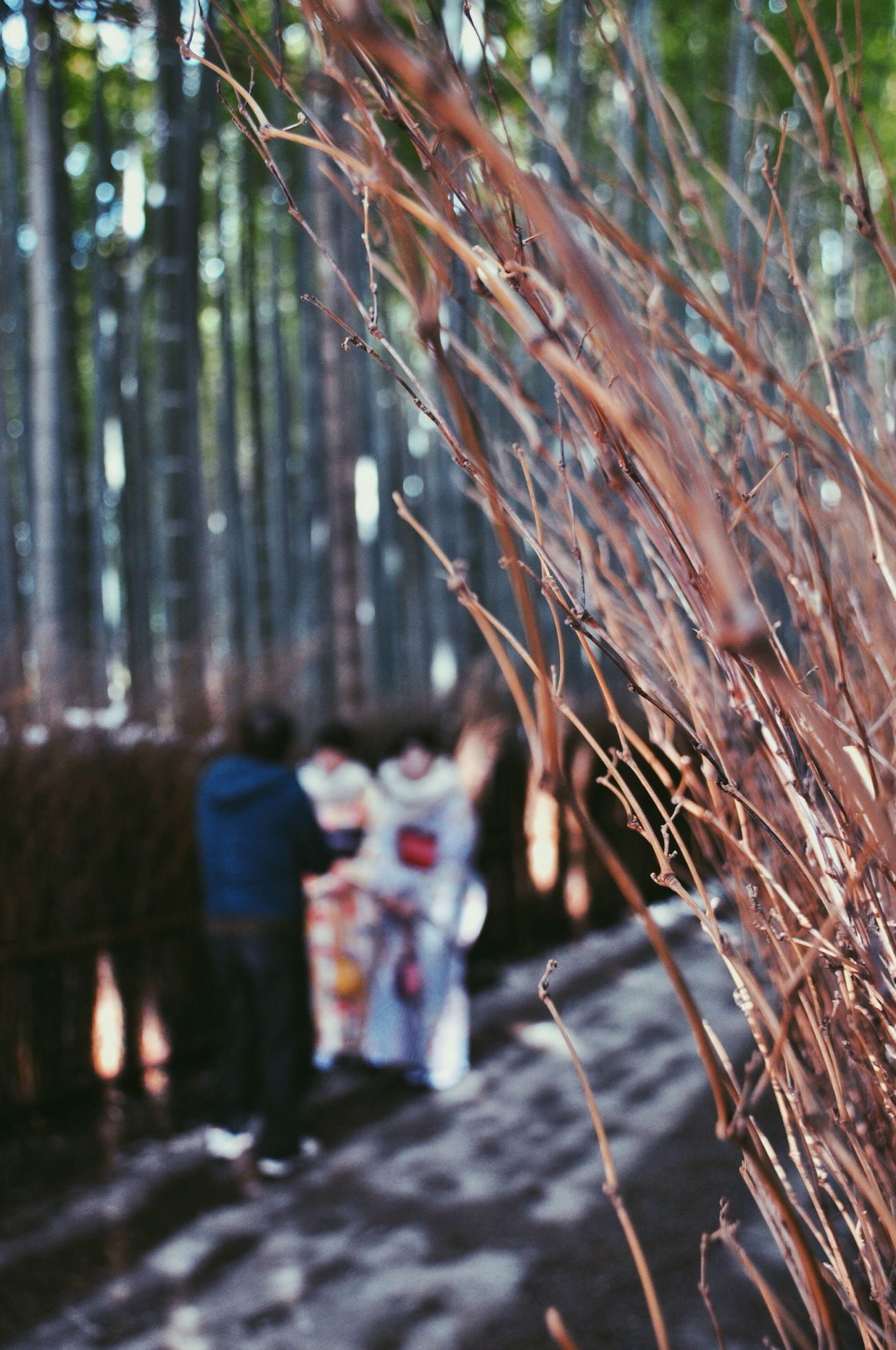 Real People Lifestyles Men Tree Outdoors Women Nature Day Bamboo Grove