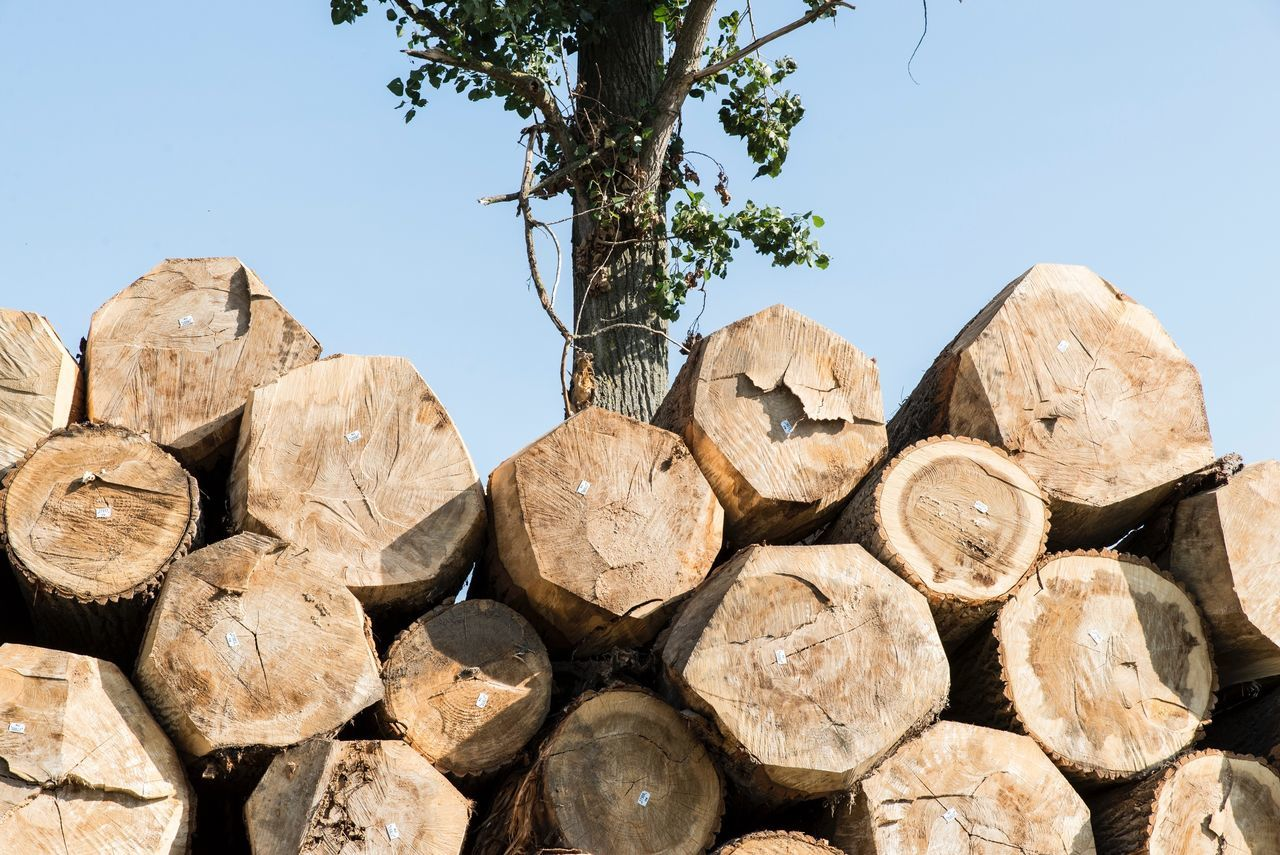 stack, log, timber, deforestation, clear sky, lumber industry, no people, woodpile, large group of objects, tree, wood - material, day, outdoors, nature, forestry industry, sky