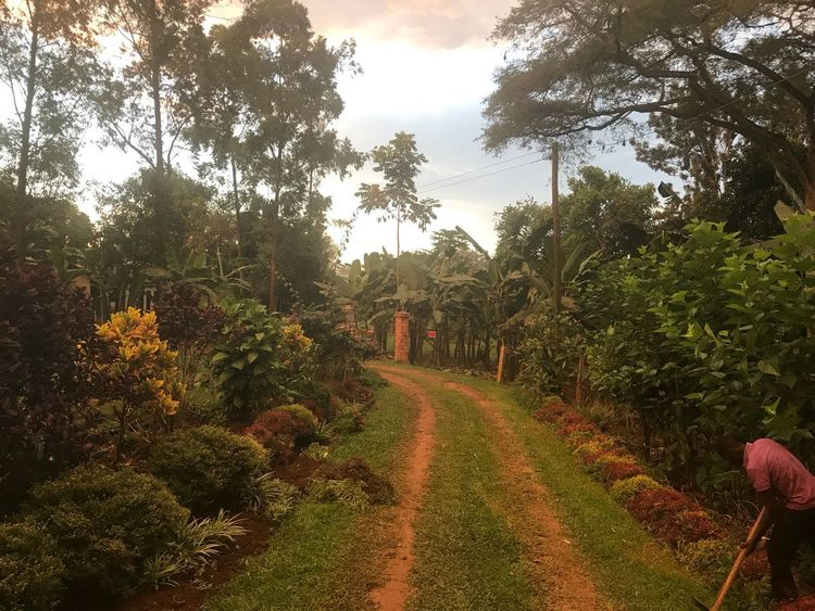 Nature Tree Growth Tranquility Beauty In Nature Tranquil Scene Outdoors Landscape Day The Way Forward Scenics Cloud - Sky Plant Sky Uganda