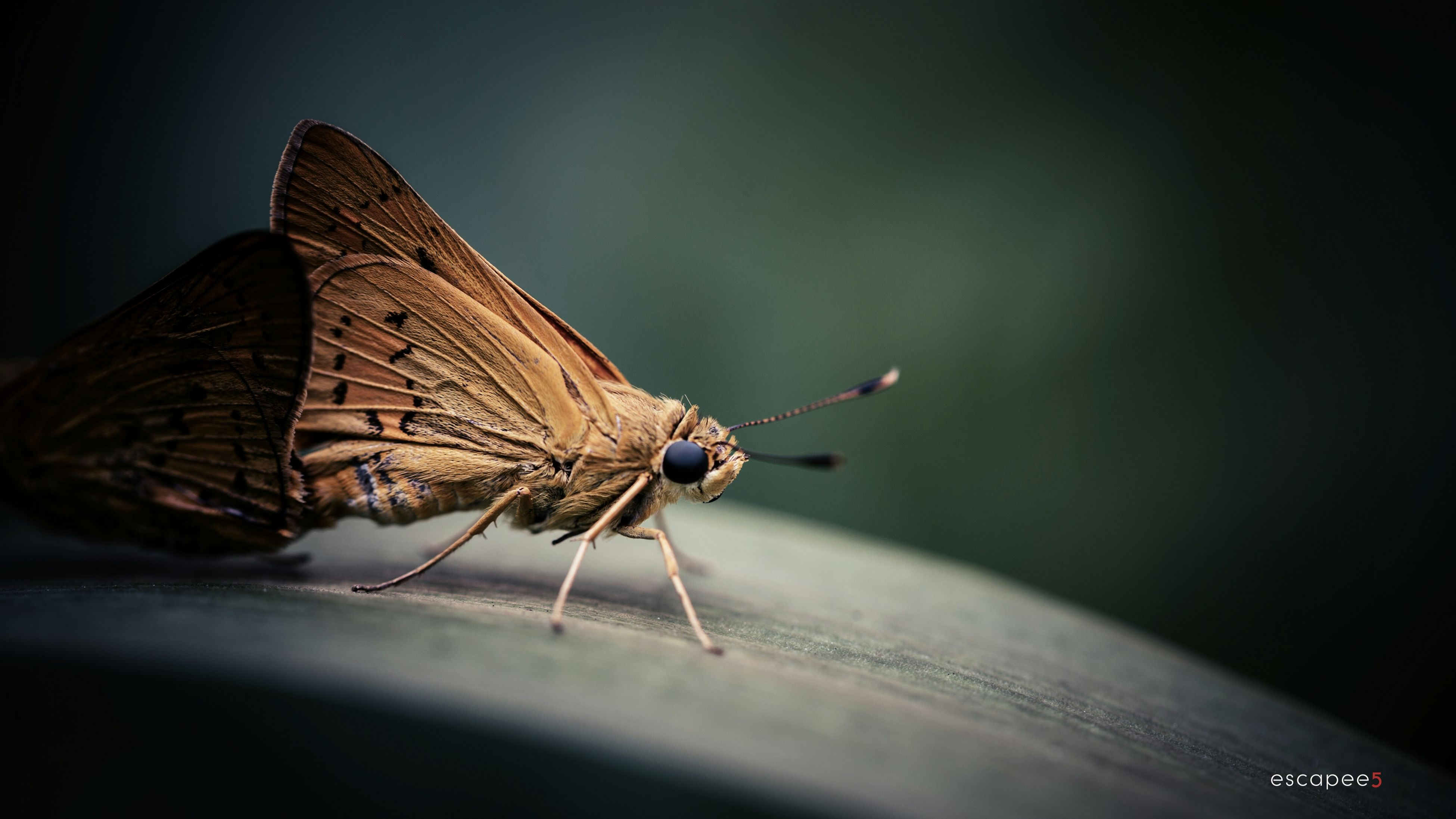 one animal, animal themes, animals in the wild, insect, wildlife, close-up, focus on foreground, animal antenna, selective focus, animal wing, full length, nature, dragonfly, day, outdoors, butterfly, perching, no people, natural pattern, butterfly - insect