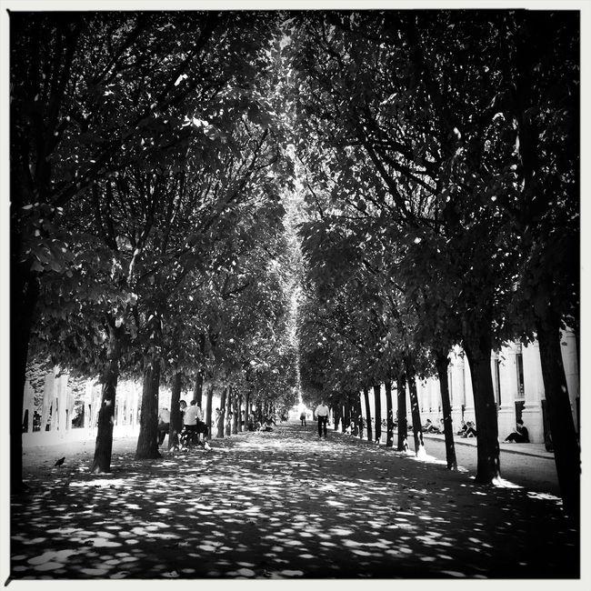 Good Evening Paris! Bon Week-end! Photooftheday Paris ❤ Parisweloveyou EyeEm Best Shots Paris Blackandwhite Hipstamatic