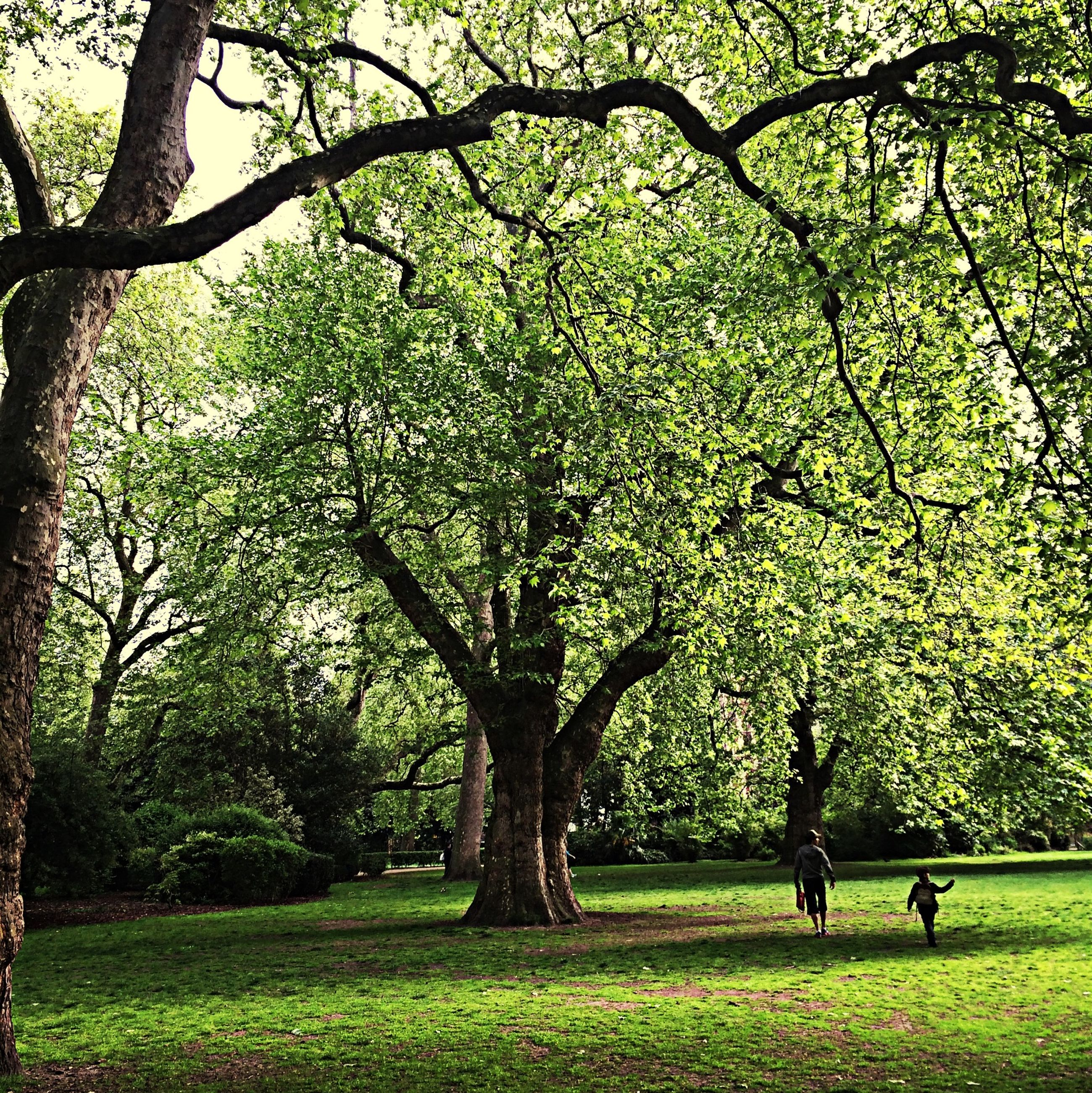 tree, grass, park - man made space, growth, branch, green color, leisure activity, men, nature, person, park, beauty in nature, tranquility, lifestyles, tranquil scene, sunlight, scenics, field, flower