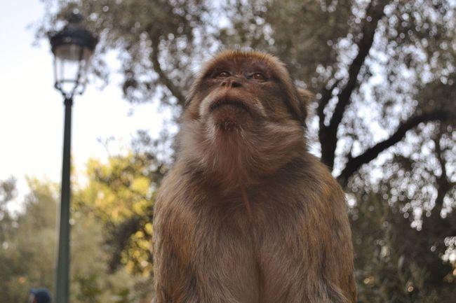Animals Marrakech Memories Monkey Nature One Animal Ouzoud Falls Travel Wildlife
