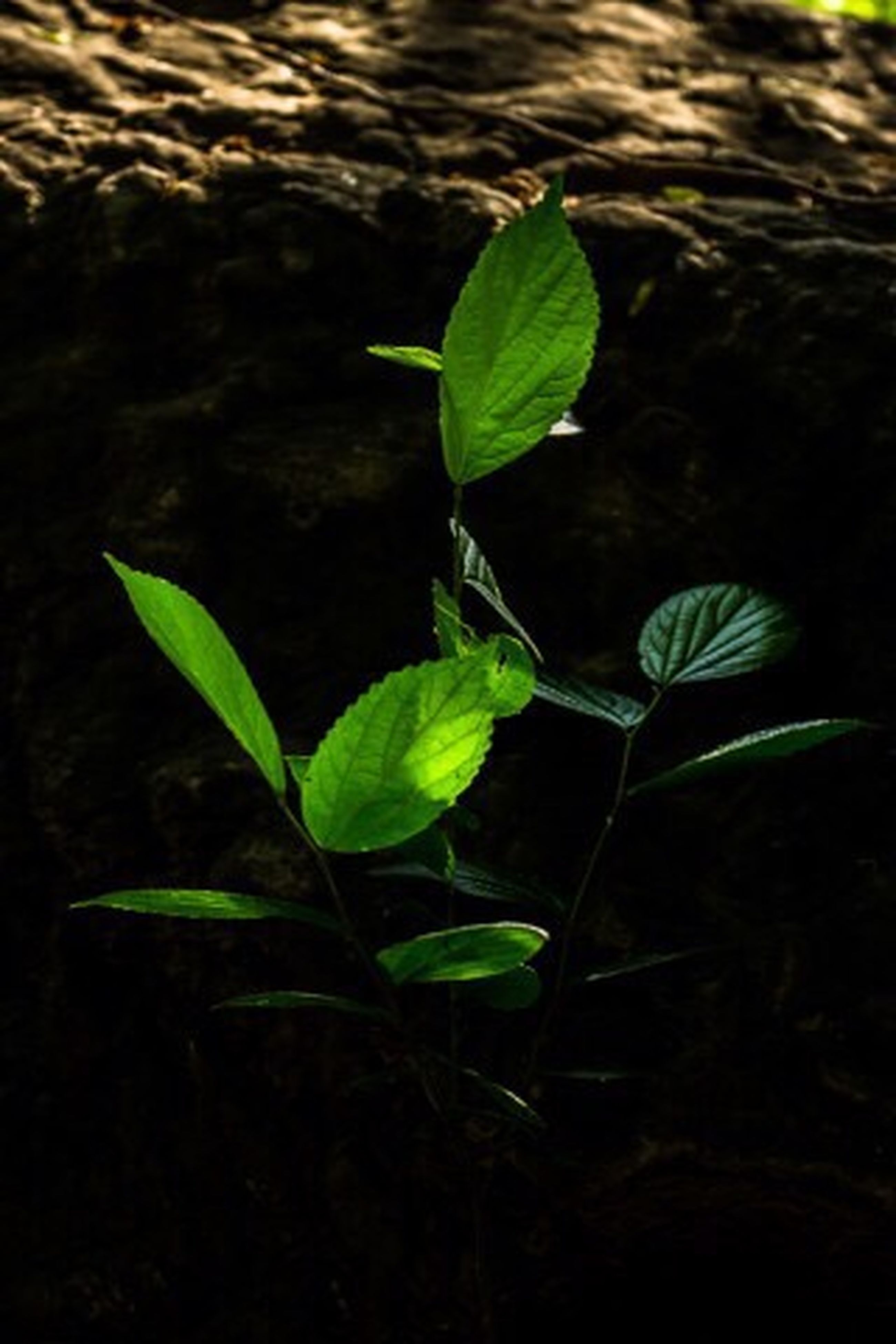 leaf, growth, plant, green color, nature, close-up, stem, freshness, beauty in nature, water, growing, bud, beginnings, green, focus on foreground, fragility, outdoors, no people, new life, day