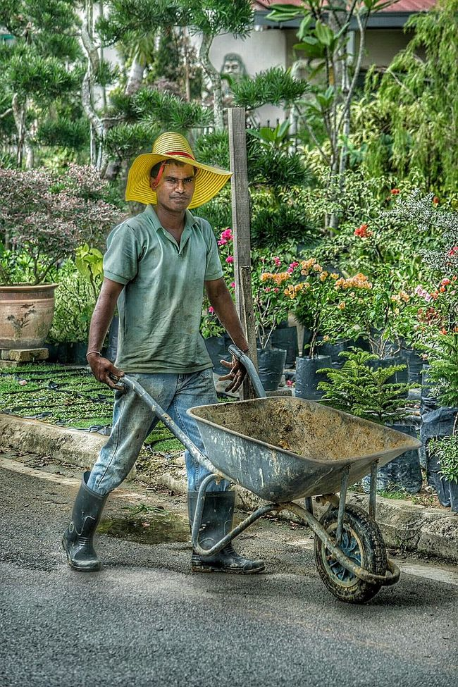 Gardener People Photography Working Straw Hat Horticulturist Sungai Buloh Flower Grower Sun Hat Hats Gardening People Watching Outside Colors Random Malaysia Wheelbarrow Pushing Worker Person Hat Eye4photography  Day At Work T Shirt