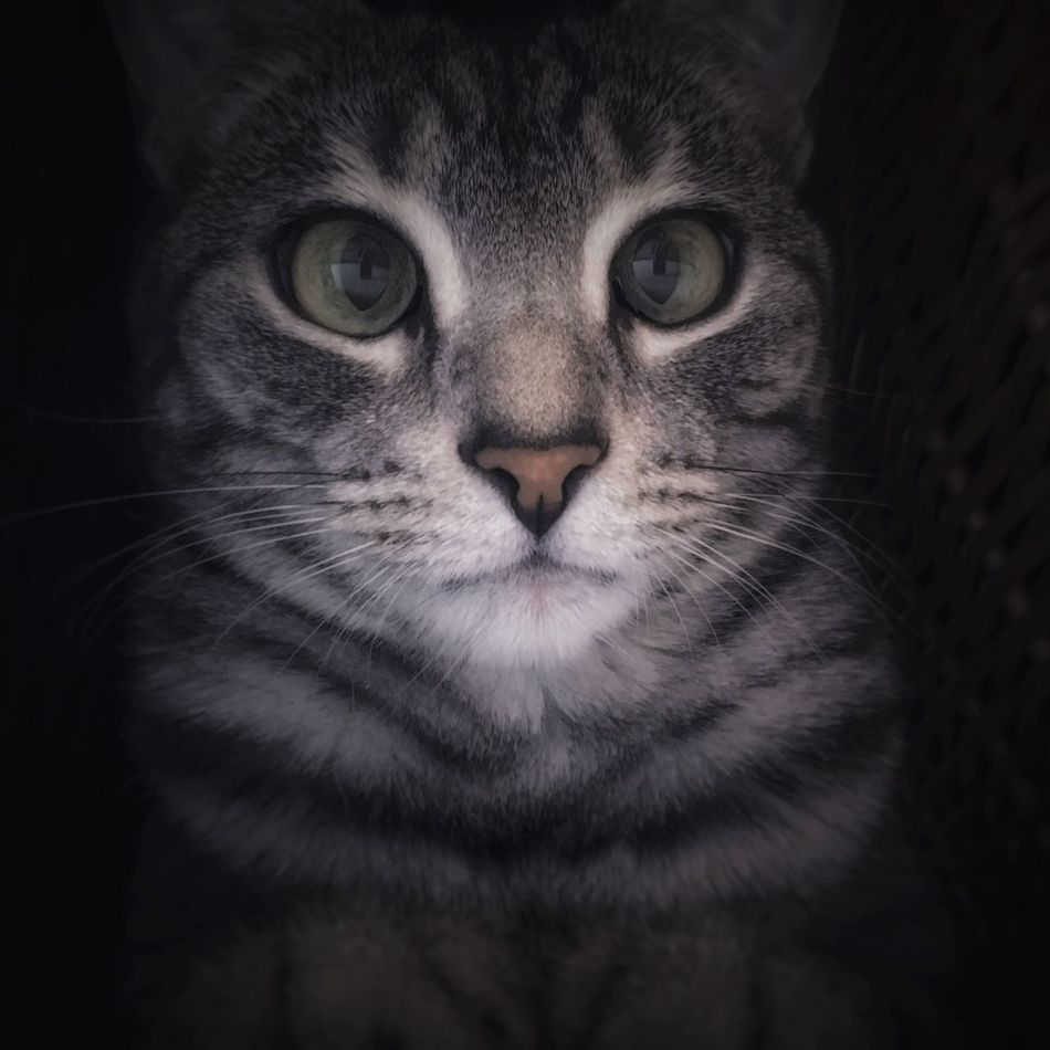 It's her ordinary location Cat Cat Lovers Egyptianmau IPhone IPhoneography