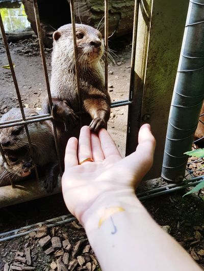 Otters Amazing View Adventure Mobile Phone Fast Shoot Beautiful Summer Power In Nature Animals In The Wild Animal Photography 2017 Photo Switzerland The Week On EyeEm Beautiful Animal Amazing Sunny