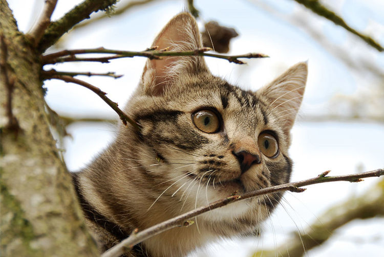 Cat Animals Nature_collection Eye4photography