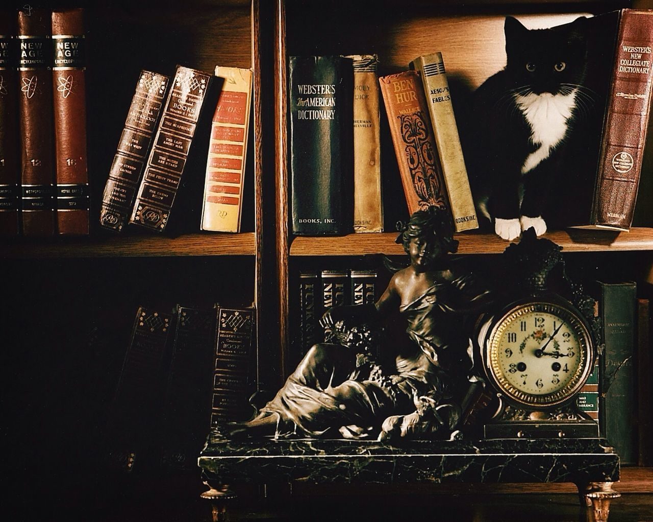 Beautiful stock photos of clock, Animal Themes, Book, Book Shelf, Cat