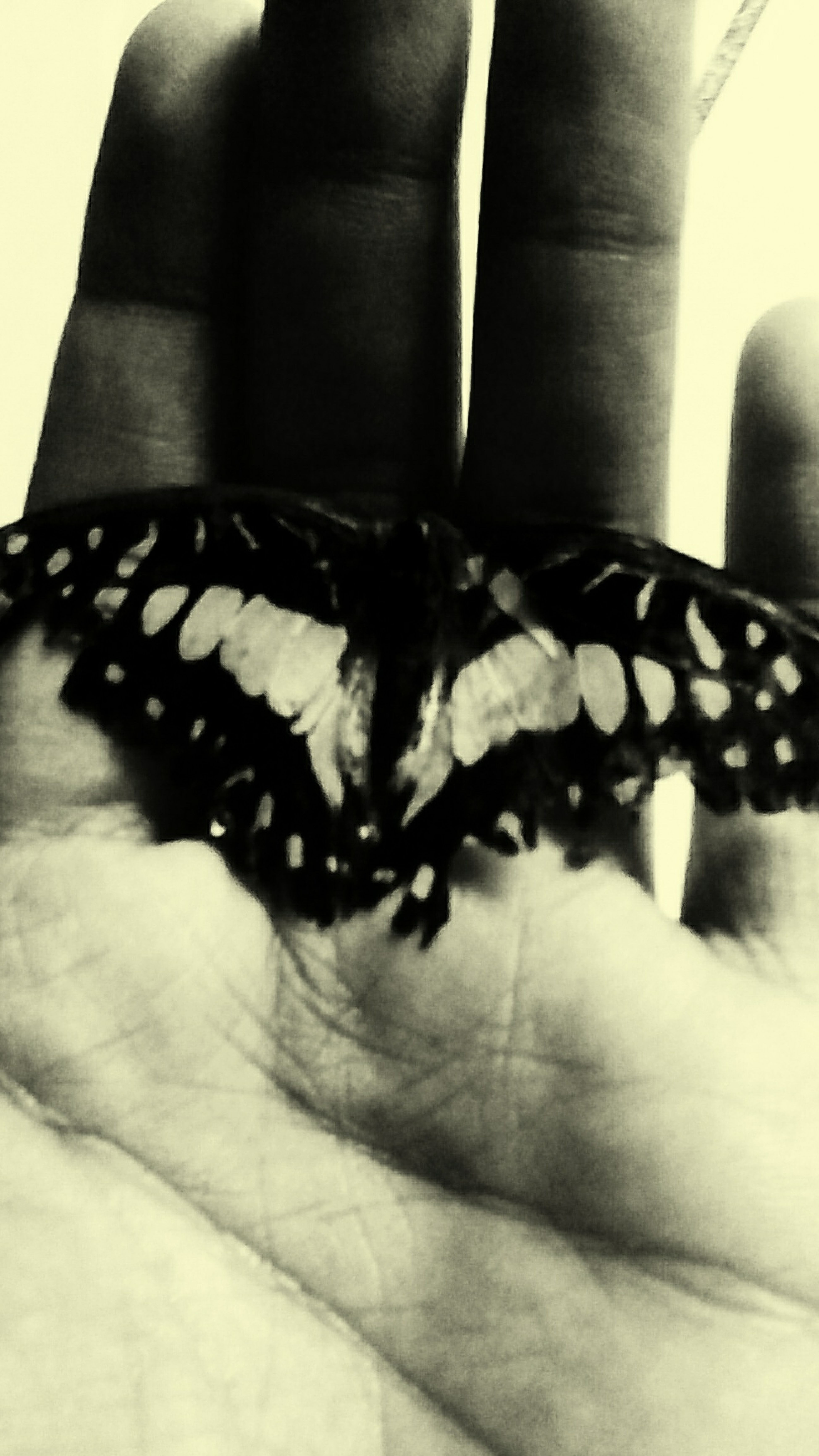 life is fragile. it has beautiful starts and nice endings Dead Butterflies Rest In Peace ❤ Butterfly Embalmer Monochrome_Monday